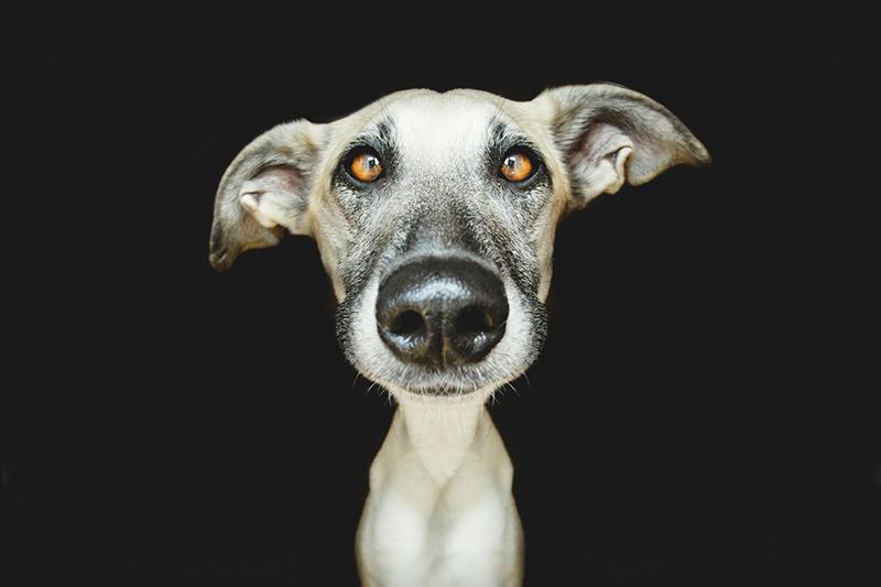 dog-4_mini