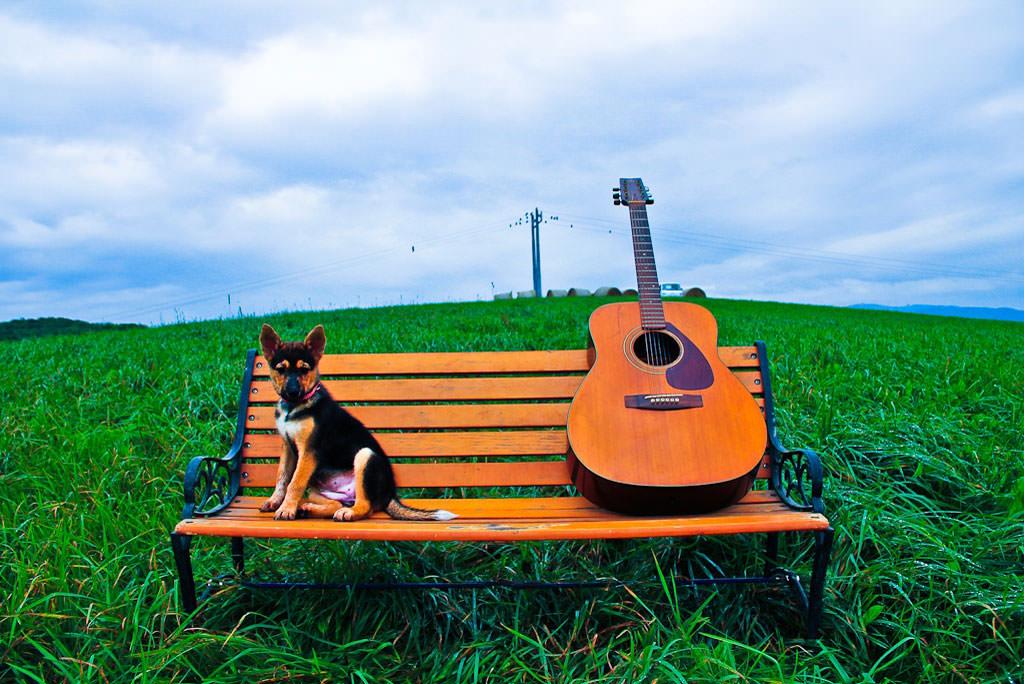 guitar-3_mini
