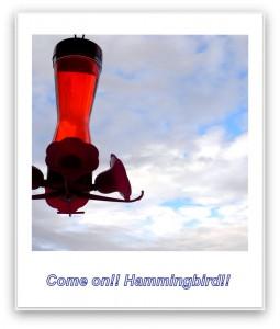 Hammingbird feed