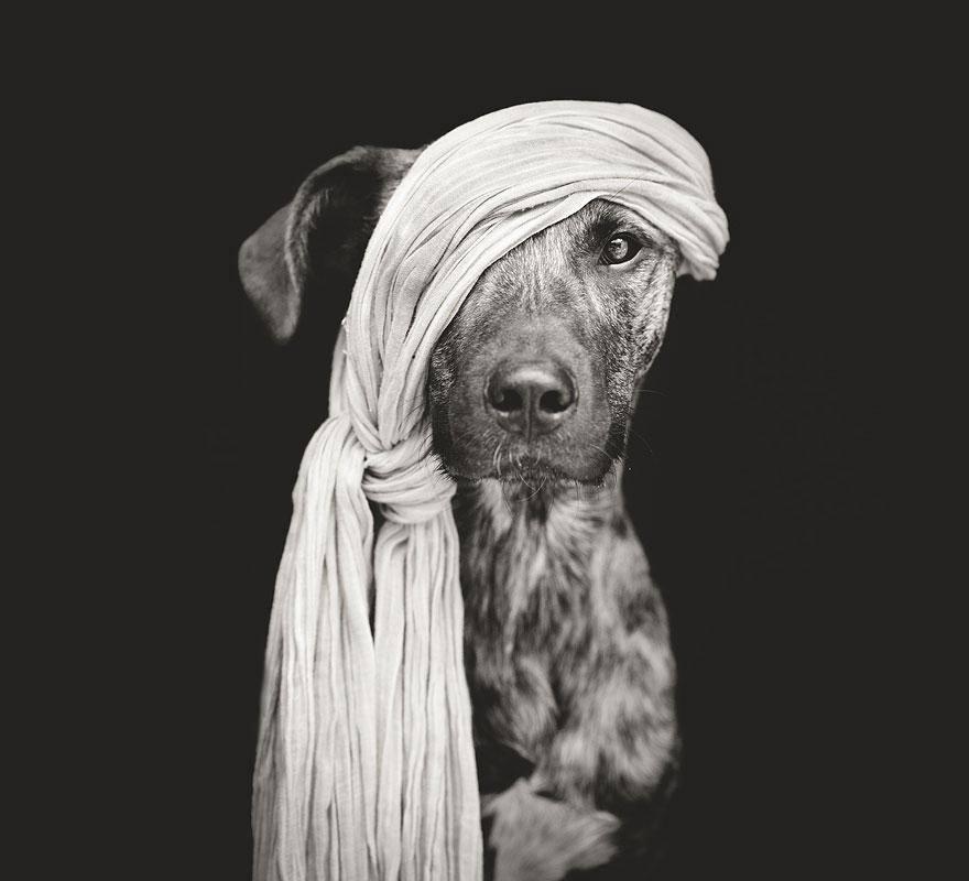 dog-13_mini