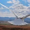 「そうだ、空に行こう」そんなあなたのための鳥目線